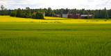 Countryside, Vasarainen