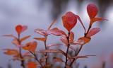 Lapland Fall