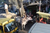Delhi street