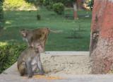 Monkey family hide and seek