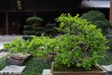 Nan Lian Garden DSC_7328