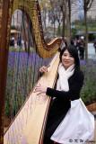 Arielle Wong (Harp Soloist) DSC_4084