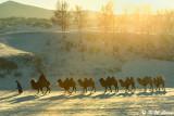 Winter in Inner Mongolia (冬日內蒙)