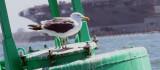 Gull on Bouy.jpg