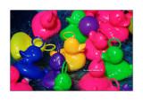 Colours of the fair 31