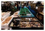 Tsukiji Fish Market - Tokyo 14