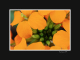 Orange bouquet