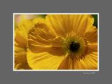 Floral 63