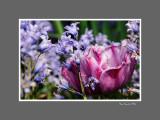 Floral 66