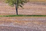 Tree In A Field DSCF02462