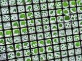 Soapy Window Screen DSCF02889