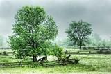 Trees In Rain 20130607