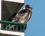 Bird On A Birdhouse DSCF04341