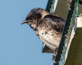 Bird On A Birdhouse DSCF04333