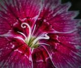 Flower Macro DSCF04708