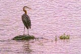Heron In The River At Sunrise 20130627