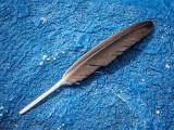 Fallen Feather DSCF05237