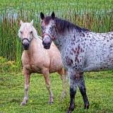 Equine Pals 20130708