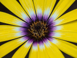 Yellow & Purple Flower 20130716