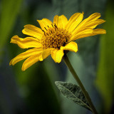 Yellow Flower 20130723