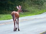 Road Hazard DSCF06289