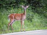 Roadside Attraction DSCF06283