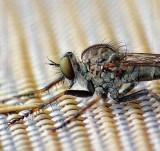 Bug Macro DSCF06811-5