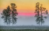 Foggy Sunrise 20130731