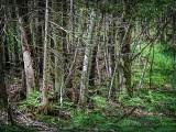 Purdon Conservation Area DSCF05371