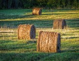 Four Bales At Sunrise DSCF08717