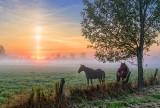 Solar Pillar & Horses 20130920