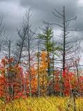 Autumn New Growth DSCF09030
