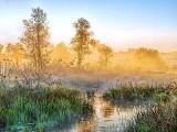 Hutton Creek In Misty Sunrise 20130925