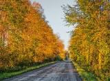 Early Autumn Backroad DSCF09133