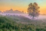 Lone Tree In Misty Sunrise 20130926