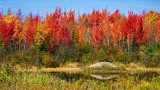 Autumn Trees Beyond Pond 20130930