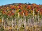 Autumn Mountainside DSCF09417