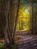 Autumn Light DSCF09703