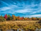 Autumn Marsh DSCF09764