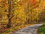 Autumn Backroad DSCF09775