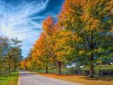 Autumn Backroad DSCF09759