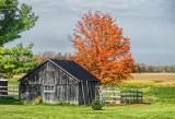 Shed & Autumn Tree DSCF09632-4