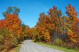 Autumn Backroad DSCF09767