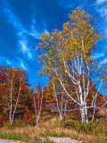 Autumn Landscape DSCF10073