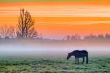 Horse In Misty Sunrise 20131013