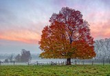 Lone Autumn Tree DSCF4196-8