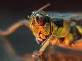 Grasshopper On Glass DSCF10330