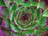 Floral Pattern DSCF11052