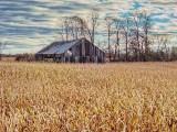 Decaying Barn DSCF11202-4