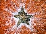 Snow On The Pumpkin DSCF11394-6